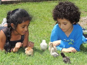 Children with baby chicks